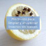 Mis trucos para limpiar y ahuyentar insectos sin tóxicos